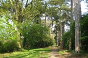 Carpenders Park Lawn Cemetery: Woodland Walk