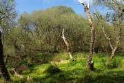Lush woodland by the Erme