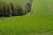 Wolds' Field