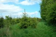 Small Woodland, Burton Fleming Grange