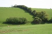 Cullompton: below Coombe Farm