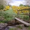 Footbridge and gorse near Birley