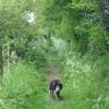 Along the Ridgeway path at Wigginton