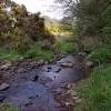 Birley Brook