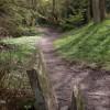 Footpath through the woods near Birley