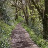 Footpath through the woods to Wigley