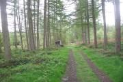 Track, Coed  Cwm