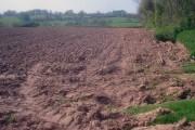 Farmland near Quarry Coppice