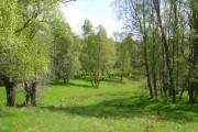 Birch woodland near the South Drive of Finzean House