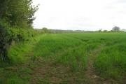 Winter crop, Lower Upton