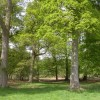 Hinton Park, woodland