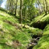 Small stream in the woods of Inverchaolain Glen