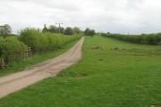 A long thin field, Hatfield