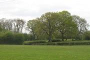 Grassland, Hatfield