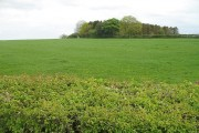 Grassland, Puddeston