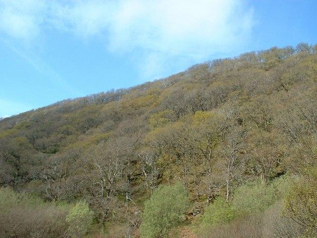 Hillside in Taynish