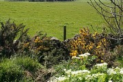 Moss-side of Arthrath