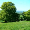 Crickley Hill Country Park (18)
