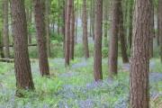 Westy Bank Wood near Bolton Abbey