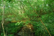 The headwaters of the River Teise near Pembury