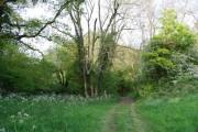The Tunbridge Wells Circular Walk & High Weald Landscape Trail entering a woodland near Pembury