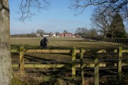 Horse Paddock by New Forest