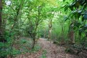 Gregg's Wood