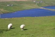 Loch of Queyfirth