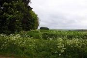 Farmland next to Cuckhamsley Hill Wood