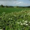 Farmland at Fownhope