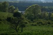 Brook's Statnalls Wood
