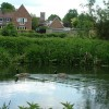 Geese on the River Lark, Mildenhall