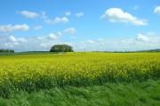 Farmland South West of Killerby Grange
