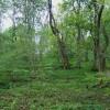 Woodland, Cressbrook Dale.