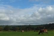 Dairy cows near Rewlach