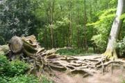 Woodland by Runfold