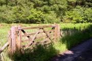 Woodland gate at Lan-clyn- Adda.