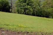 Farmland at Llwyncalenig.
