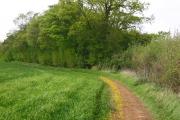 Between Weston Hills and Bush Wood