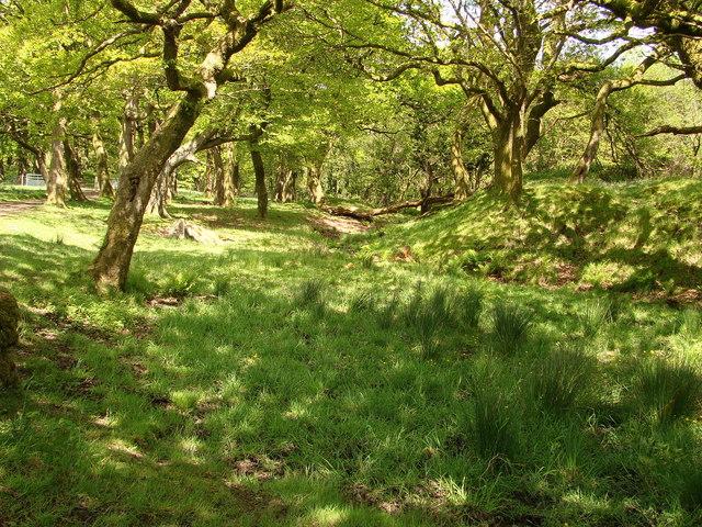 A woodland walk