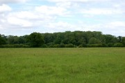 Wooded farmland northwest of Gayton