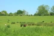 Farmland West of Hornsea