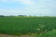 Farmland East of Seaton