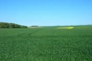 Farmland South East of Danebury Manor