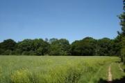 Gosbeck Wood