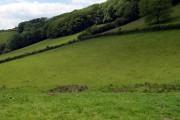 Woodland near Penbwlch isaf.