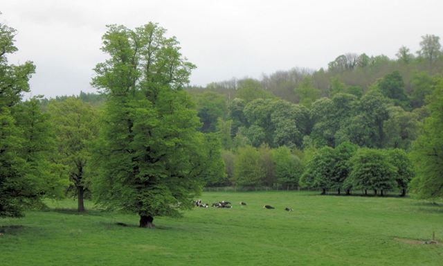 Tring Park – with cattle grazing the rich pasture