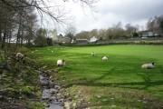 Sheep next to a brook