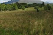 Meadow, Blain