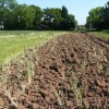Ploughed Field at Toton